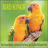 Bird Songs: Birds of Amazon Rainforest, North American Forest Sounds, Loon Calls & Other Bird Sounds for Birds by Robbins Island Music Group