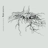 Raíz Spinetta - Versiones Folkloricas, Vol. 3 by Various Artists