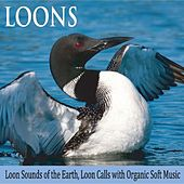 Loons: Loon Sounds of the Earth, Loon Calls With Organic Soft Music by Robbins Island Music Group