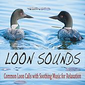 Loon Sounds: Common Loon Calls With Soothing Music for Relaxation by Robbins Island Music Group