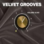 Velvet Grooves Volume Alive! by Various Artists