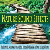 Nature Sound Effects: Thunderstorms, Ocean Waves With Dolphins, Humpback Whales, Rain and Wind for Deep Relaxation by Robbins Island Music Group