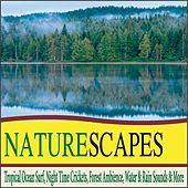 Naturescapes: Tropical Ocean Surf, Night Time Crickets, Forest Ambience, Water & Rain Sounds & More by Robbins Island Music Group