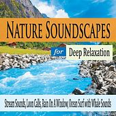 Nature Soundscapes for Deep Relaxation: Stream Sounds, Loon Calls, Rain On a Window, Ocean Surf With Whale Sounds by Robbins Island Music Group