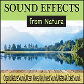 Sound Effects from Nature: Organic Nature Sounds, Ocean Waves, Rain, Forest Sounds, Water, & Cricket Sounds by Robbins Island Music Group