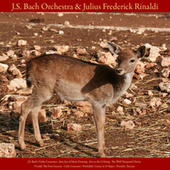 J.S. Bach: Violin Concerto; Jesu, Joy of Man's Desiring; Air On the G String; the Well - Tempered Clavier - Vivaldi: the Four Seasons; Cello Concerto - Pachelbel: Canon in D Major - Paradisi: Toccata - Vol. VIII by Johann Sebastian Bach