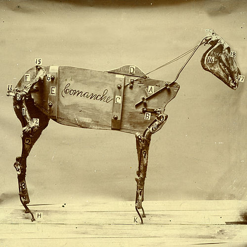 The Horse Comanche by Chadwick Stokes