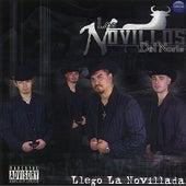 Llego La Novillada by Los Novillos Del Norte