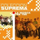 Colección Suprema by La Mosca Tse Tse