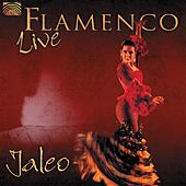 Flamenco Live by Jaleo