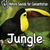 Nature Sounds for Concentration - Jungle by Study Music