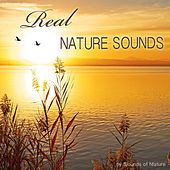 Real Nature Sounds by Sounds Of Nature