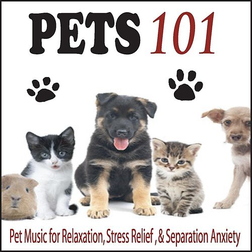 Pets 101: Pet Music for Relaxation, Stress Relief, & Separation Anxiety by Robbins Island Music Group