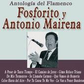 Antología del Flamenco: Fosforito y Antonio Mairena by Various Artists