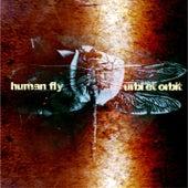 Urbi et orbit by Human Fly