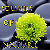 Sounds Of Nature Vol.2 by Spirit
