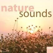 Nature Sounds by Meditation