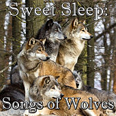 Sweet Sleep: Songs of Wolves by Wilderness
