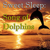 Sweet Sleep: Songs of Dolphins by Wilderness
