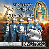 Serenata a la Virgen de Guadalupe by Bronco