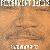 Black Widow Spider by Peppermint Harris