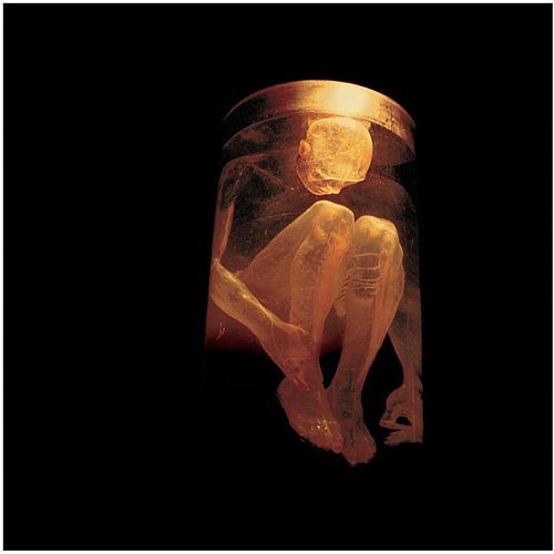 Nothing Safe: The Best Of The Box by Alice in Chains