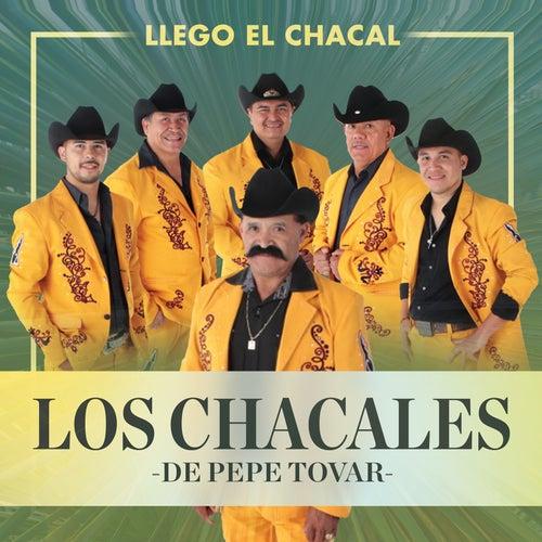 Llego el Chacal by Los Chacales de Pepe Tovar