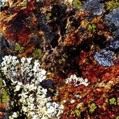 Lichens by Gianni Gebbia