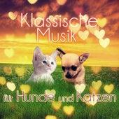 Klassische Musik für Hunde und Katzen – Entspannungsmusik Wenn sie Allein zu Hause, Beruhigende Musik, Instrumentalmusik für Haustiere, Gelassenheit für Welpen & Kätzchen, Tiefenentspannung by Haustiere Musik Welt