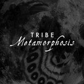 Metamorphosis by Tribe