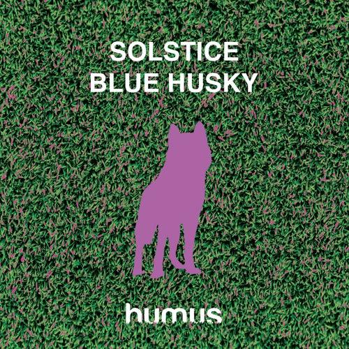Blue Husky by Solstice