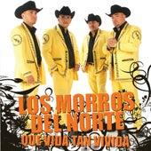 Que Vida Tan Vivida by Los Morros Del Norte