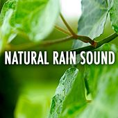 Natural Rain Sound by Various Artists
