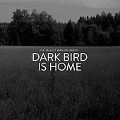 Dark Bird Is Home by The Tallest Man On Earth