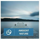 Ambient Nature by Various Artists