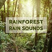 Rainforest Rain Sounds by Various Artists