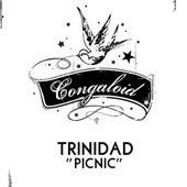 Picnic (Original Mix) by Trinidad