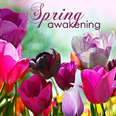 Spring Awakening – Relaxing Healing Music for Winter into Spring Equinox von Various Artists
