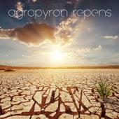 Agropyron Repens by Koan