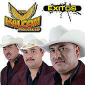 Exitos by Trio Halcon Huasteco
