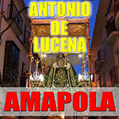 Amapola by Antonio De Lucena