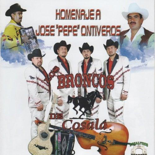 Homenaje a Jose Pepe Ontiveros by Los Broncos De Cosala