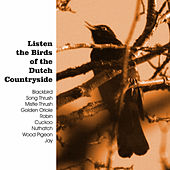 Listen the Birds of the Dutch Countryside by The Birds