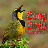 Song Birds (Nature Sounds) by Nature Soundscape