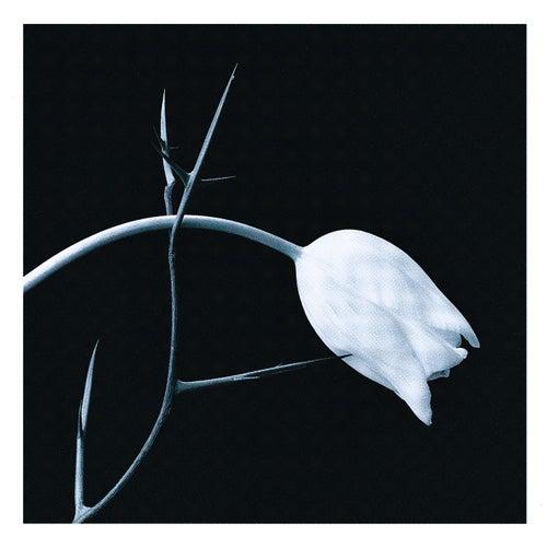 El Tango by Gidon Kremer