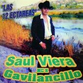 Las 12 Hectarias by Saul Viera el Gavilancillo