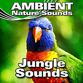 Jungle Sounds by Ambient Nature Sounds