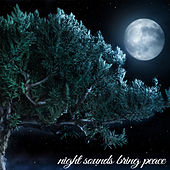 Night Sounds Brings Peace by Various Artists