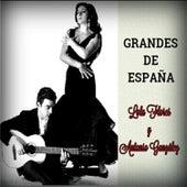 Grandes de España by Antonio González