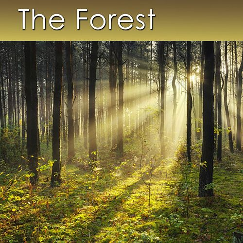 The Forest (Relaxing Music with Healing Sounds of the Forest) by Dr. Harry Henshaw